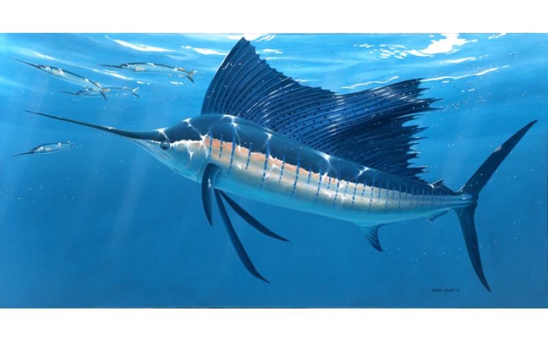 sailfish canvas