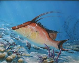Original Hogfish