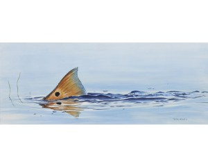 Tailing RedFish Canvas
