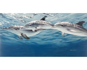 Atlantic Spotted Dolphins Canvas